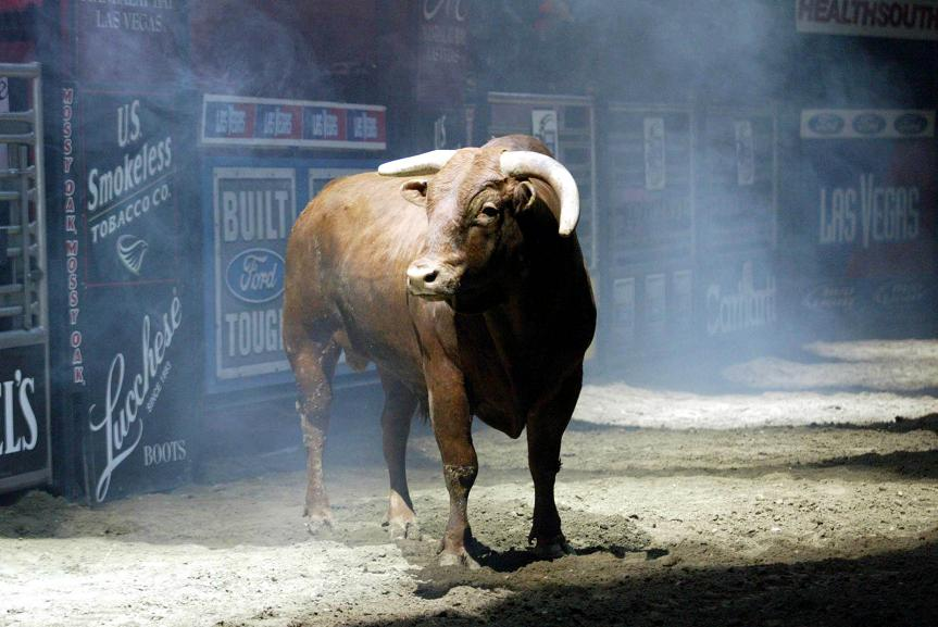 2010 by teague bucking bulls back to teague bucking bulls homepage)